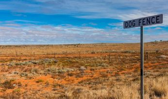 Famous wild dog fence set for virtual makeover
