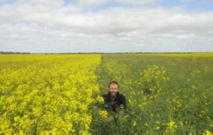WA canola trials underway