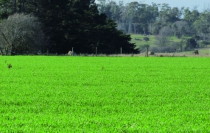 Reducing nutrient losses in the high rainfall zone