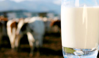 "Fury over ""farcical"" milk levy"