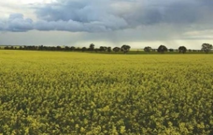 Optimising canola profitability through new understandings
