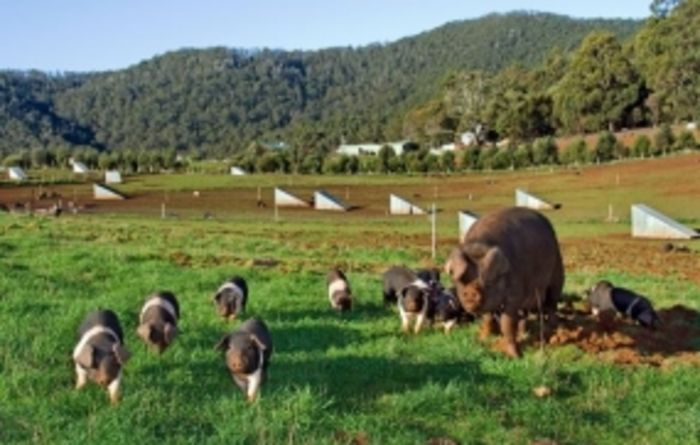 US shows keen interest in Tasmanian agriculture