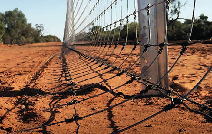 Wild dog fencing funds announced