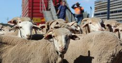 Farmers to weigh in on new rules for meat export
