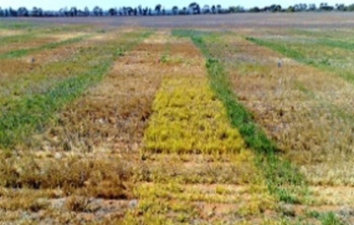 Pre-emergent herbicide knowledge set to grow