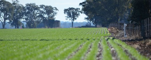 Non-herbicide weed control shows merit