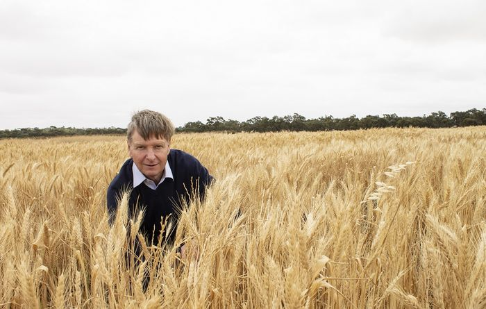 Crop competition identified to help with ryegrass control