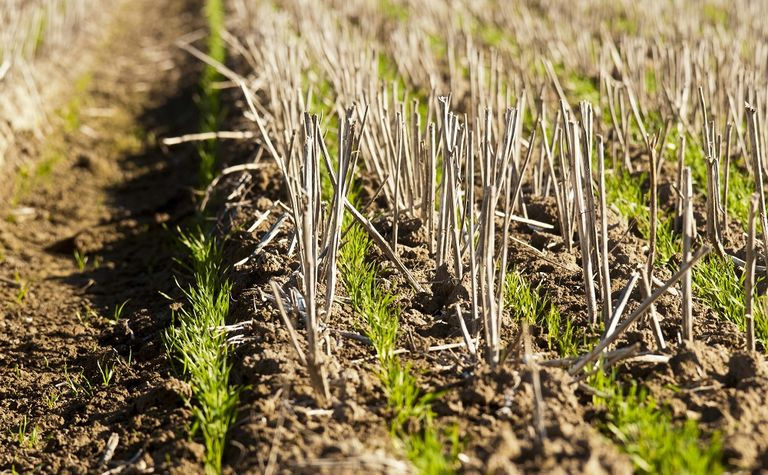 New research to increase WA crop yields