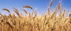 Australia's grain dynamic hinges on rain and trade