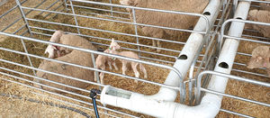 Merino maternity ward brings benefits