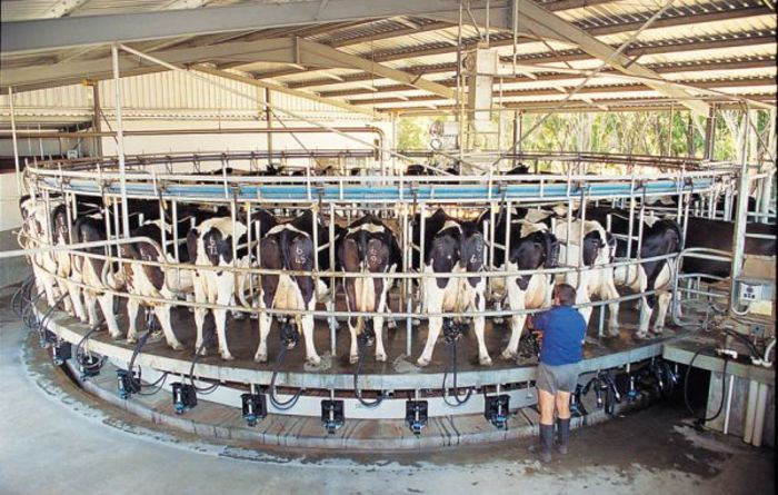 Milk levy has government support