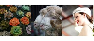 Sheep show starts next week