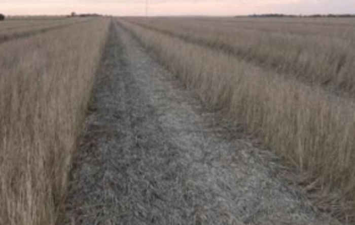 Could herbicide residues be affecting your crops?