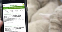 New app delivers daily sheep and cattle pricing