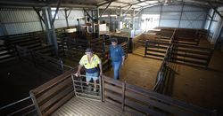 Shearing sheds inspected
