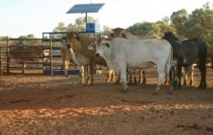Remote management system to revolutionise global cattle industry