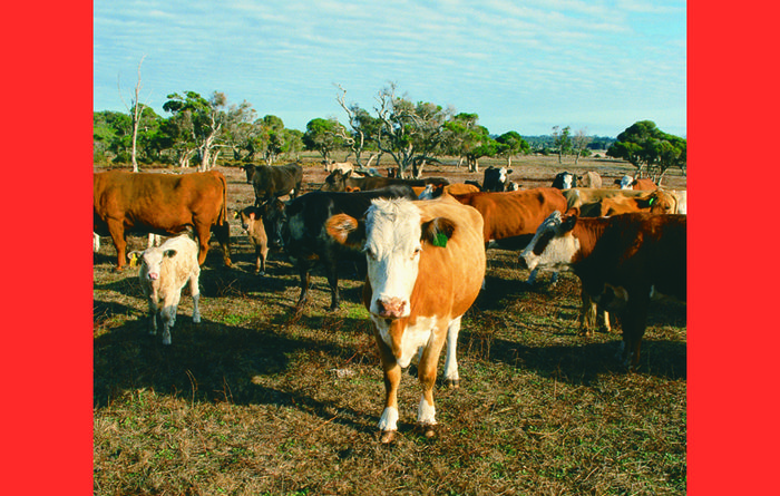 New research survey targets bloat in cattle