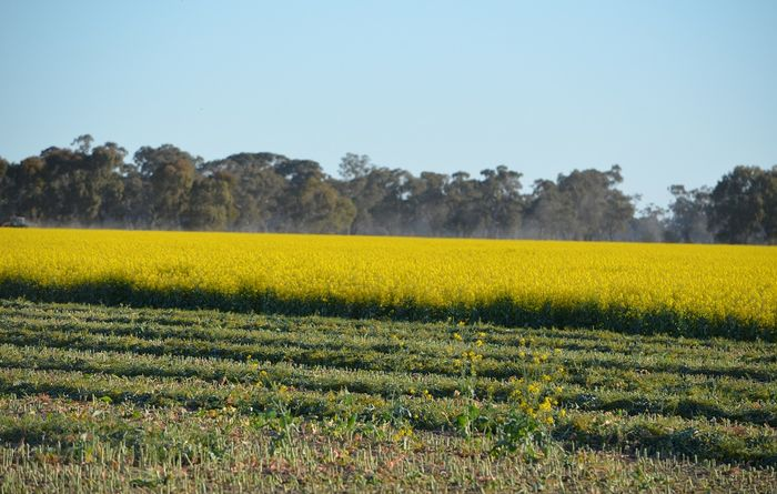 Worst frost seen for decades decimates crops