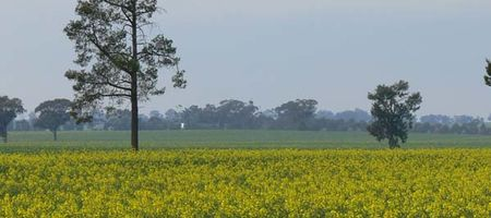 New South Wales lifts GM crop ban
