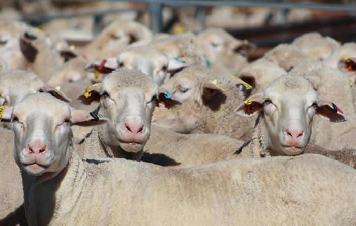 Boyanup saleyard upgrade to cost $20 million