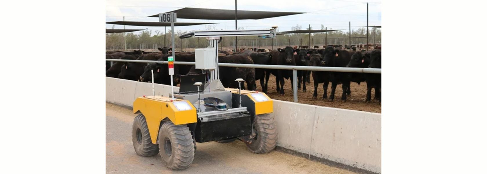 Robot doing the rounds in a feed lot
