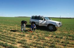 WA growers considering variable rate technology