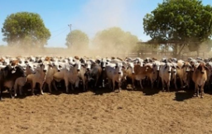 More certainty for Australian cattle producers