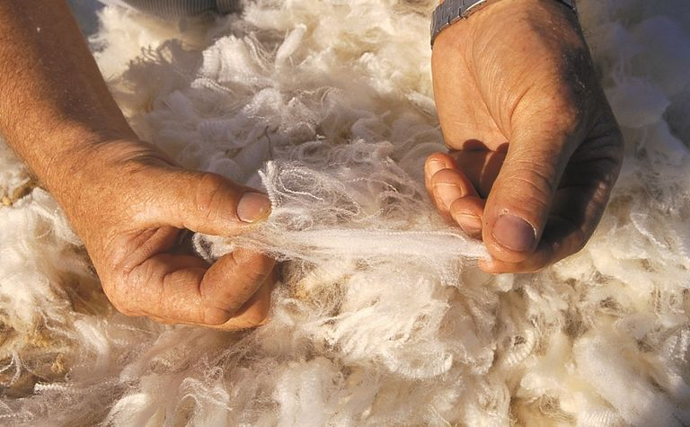 Strong wool production forecast for 2017