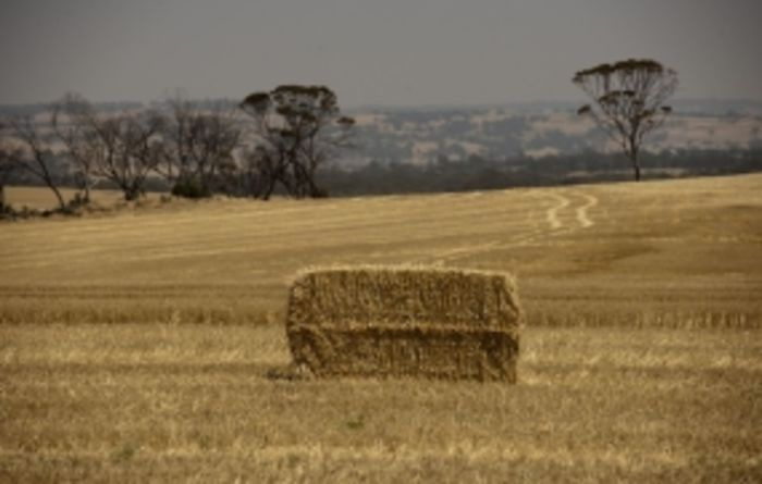 GRDC Radio offers sound advice on cutting crops for hay