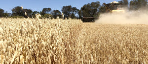 Sentry herbicide registered for use in imi tolerant oats