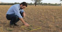 Pasture management options after drought
