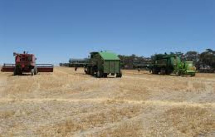 Timing and temperature key to windrow burning weeds
