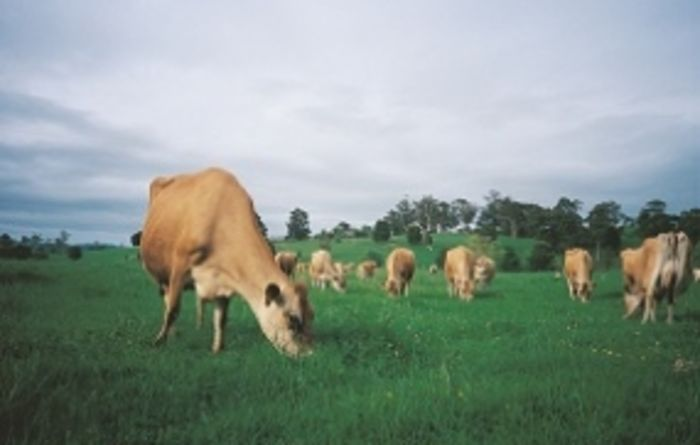 Cattle prices set to soar, says MLA