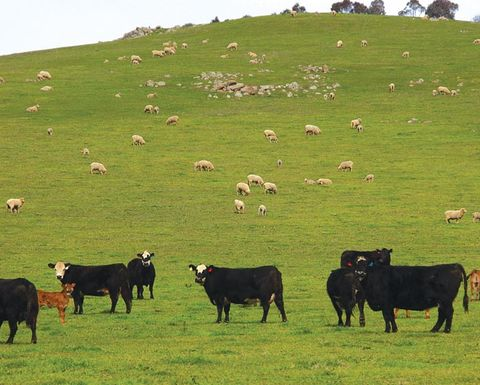 Grazing leases prove attractive