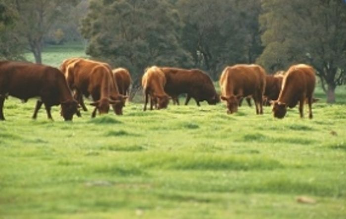 $1b Sino-Australian beef deal on the table