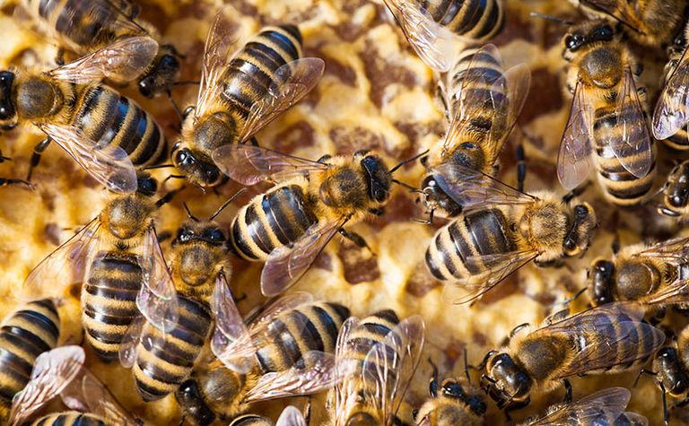 Bee Pest Surveillance program given a boost