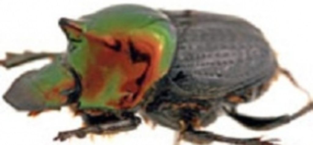 Dung beetle survey in bid to curb flies