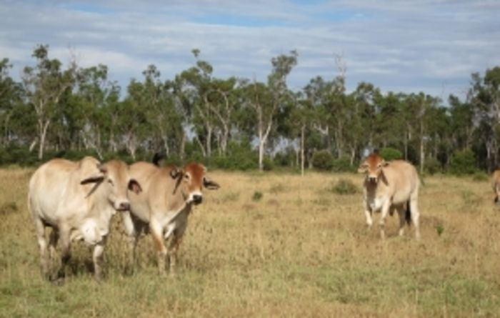 Queensland investor scoops cattle property for $10.25M