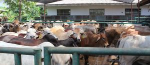 Plea to increase biosecurity funding