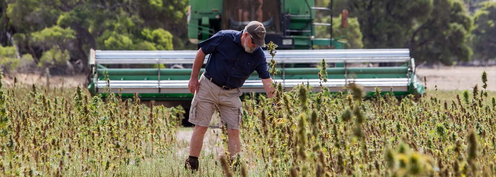 Hemp production to expand in WA