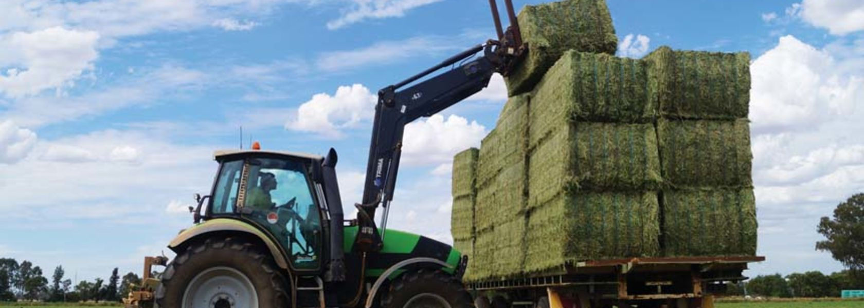 How hay can make a profit this year