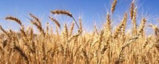 Wheat master list released