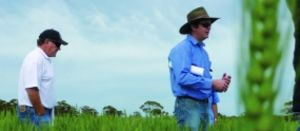 GRDC turning up the heat on annual frost
