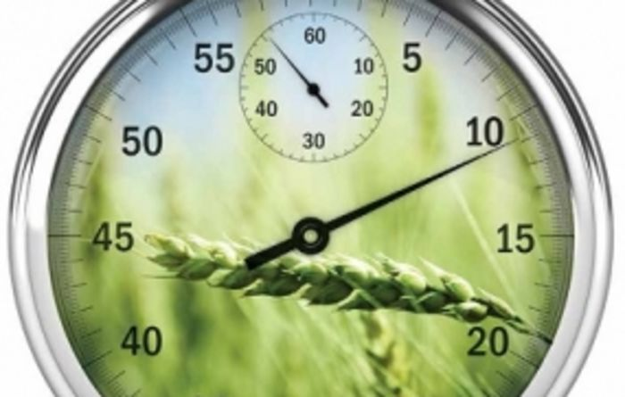 Timing is key to controlling powdery mildew in wheat