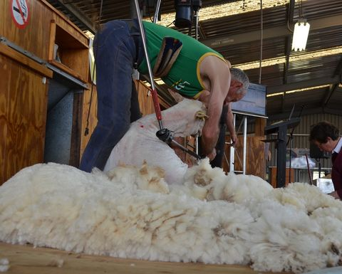 Muresk's 40-year-old shearing shed set for a makeover