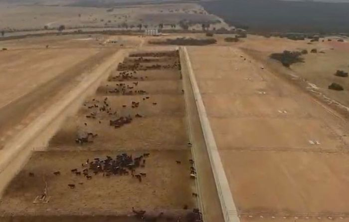 Company convicted for illegal feedlot