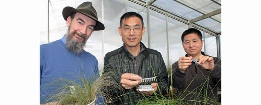 NSW researchers use DNA to beat weeds