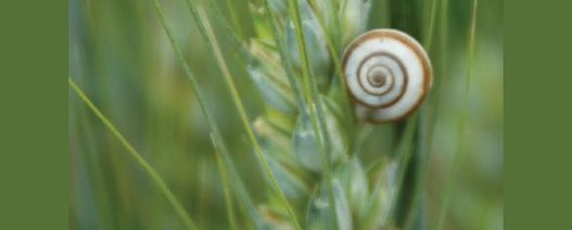 Autumn is the time to tackle snails