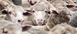 Whitsleblower service launched for live export industry