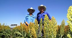 Farm-ready research on offer in Central Queensland